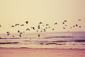 Fly Away by ebeth3