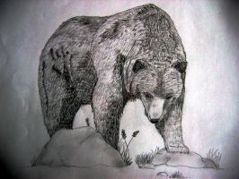 Bear by danette54
