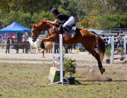 STOCK - Canungra Show 2012 119 by fillyrox
