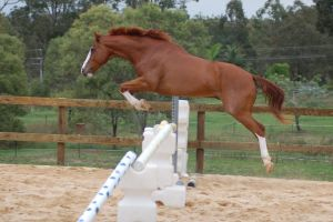ASH showjumping side knees tuc by Chunga-Stock