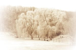 The Willows of Centennial Park by vmulligan