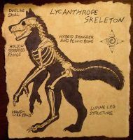 Lycanthrope Skeleton by Nashoba-Hostina