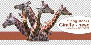 PNG STOCK SET: Giraffe - head by MAKY-OREL