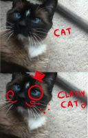 BECAUSE CATS THATS WHY by Pajuxi