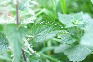 .nettles by aaronius