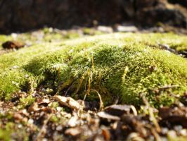 MOSS-SCAPE X by zraclooc