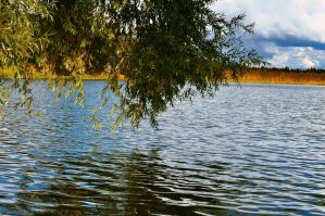 Tree over water by Tumana-stock