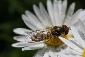 Insect on a flower 2 by kubeki