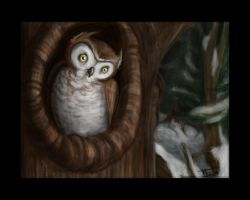 owlie by harusame