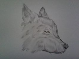 Wolf by PeCe95