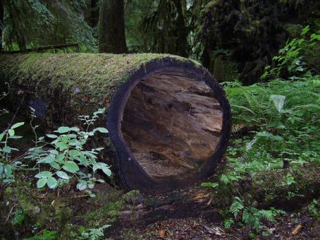 Hollow Log stock by chamberstock