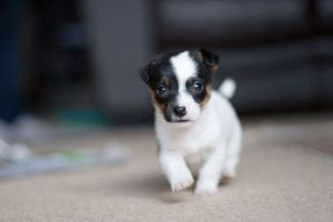 Charging Puppy by Klors