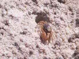 Crabby by Jessica17