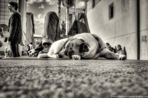 Chien MACBA-Modifier by Fogherty