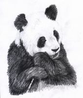 Panda by stupid-little-genius