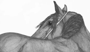 Horse 5 by KeyHof