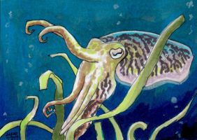 Cuttlefish sketch card by AokiBengal