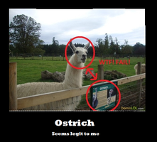 Demotivational- Ostrich by Nim888