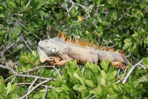 Tree Iguana by firenze-design