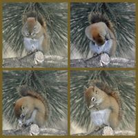 Squirrel Watching by Brian-B-Photography