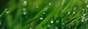 dew by StanOd