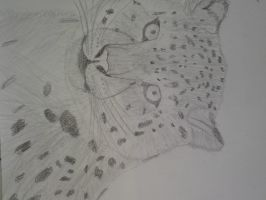 Sketched snow leopard 2 by SomethingWild7