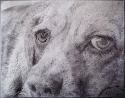 Close up of a dawg by Nusense06