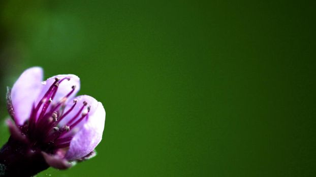 little flower by Desktopconditioner