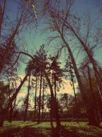trees_autumn by air-for-live
