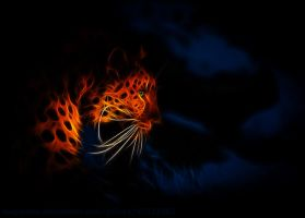 Leopard night by megaossa
