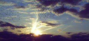 swarm of birds at sundown ( Cloudscape #22 ) by Rainbow-Trash
