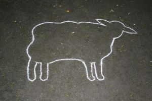 chalk sheep outline by madragonn