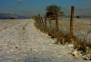 old fence by uros2006