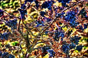 The Nature Of Colors by RiegersArtistry