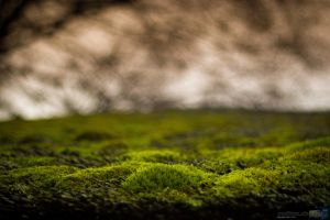 moss on roof by Puttee