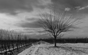 Winter Vines by 1shotaway