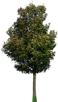 tree 42 png by gd08