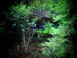 Forest Hideaway II by MadGardens