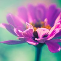 zinnia by nprkr