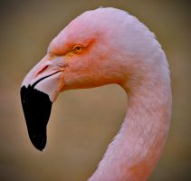 Think pink again by Yousry-Aref