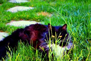 Within Every Feline There's a Predator by JDNight