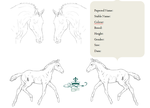 Beachview Farms Foal Reference Sheet by BeachviewFarm