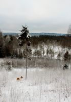 Swedish Coniferous Forest by wiklander95