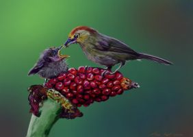 all you need is love by nosoart