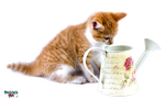 Red kitten and watering can PNG by makiskan