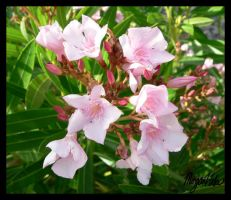 Pink Flowers by MLGn00beater