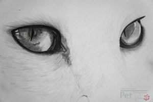 Eyes by syellameonk