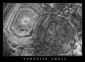 Tortoise Shell by ExquisiteDistraction