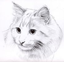 Pencil cat portrait by KingZoidLord
