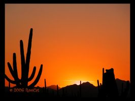 Another Spring Saguaro Sunset by RooCat